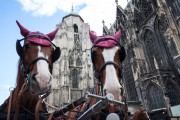 Austria-Vienna-Horse-Carriage_St-Stephan-Cathedral-5508276.jpg
